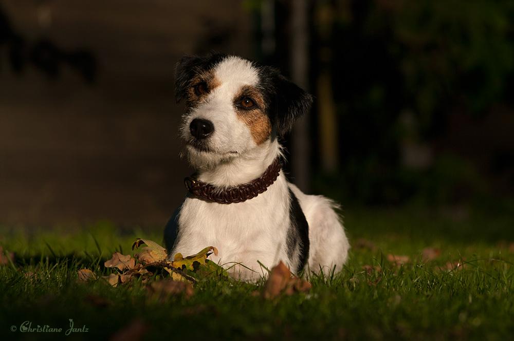 Wie lernen Hunde?