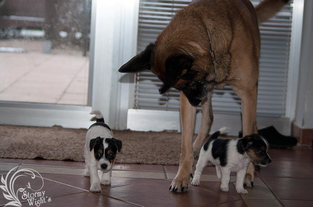 Hundeerziehung in unserer Zeit